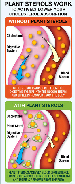 plant stanols and sterols